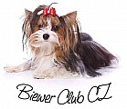 Biewer club CZ - 10. let klubu VÝS